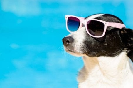 Dog wearing pink sunglasses